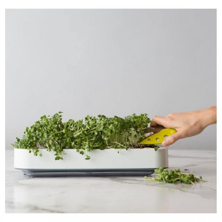 microgreen tray